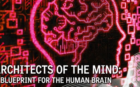 Architects of the Mind: A Blueprint for the Human Brain