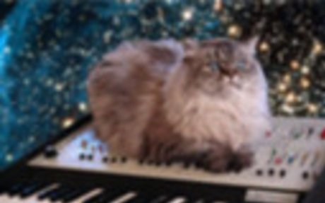 Cicás gifek / i ♥ cat gifs