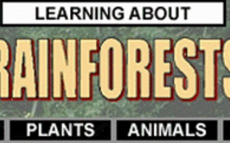 Facts on the Rainforest
