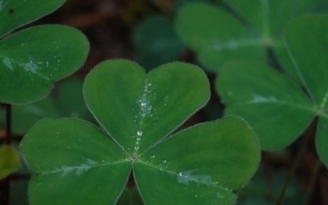 St. Patrick's Day - Origins, Facts, Celebrations, Traditions - History.com