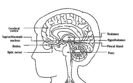 Brain Basics: Understanding Sleep | National Institute of Neurological Disorders and Strok