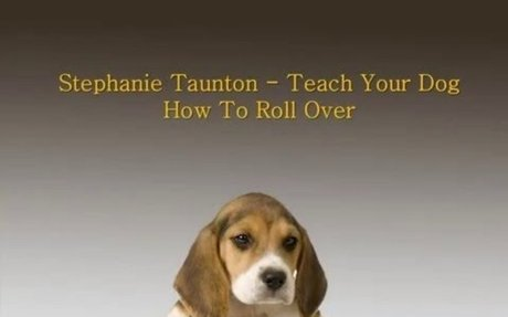 Best Tips for Teach Your Dog How To Roll Over