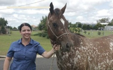 Horse Theft:  Never Give Up Hope! Horse reunited with owner two years after theft