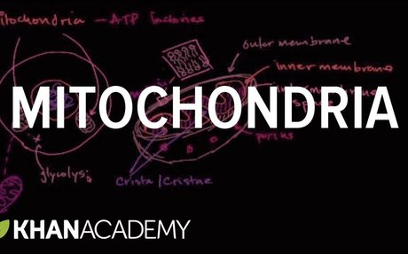 Mitochondria | Structure of a cell | Biology | Khan Academy