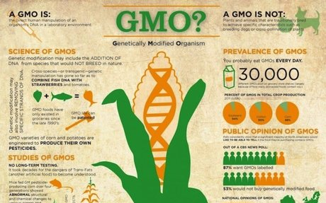 GMO Information - Kids Right To Know