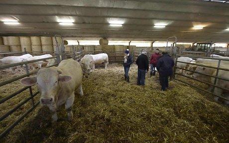 Les meilleurs taureaux de la région vendus aux enchères