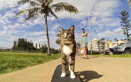 This rescued cat isprobably the most talented kitty inthe world