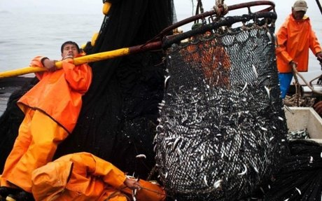 NEWS: Overfishing of Anchovies in Peru Raises some Concerns!