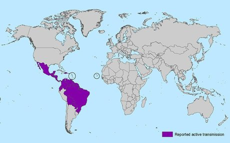 Stay Up-to-Date on the Zika Virus by the CDC