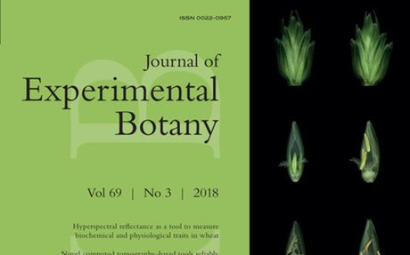 Changes in the poplar shoot apical meristem in response to water availability