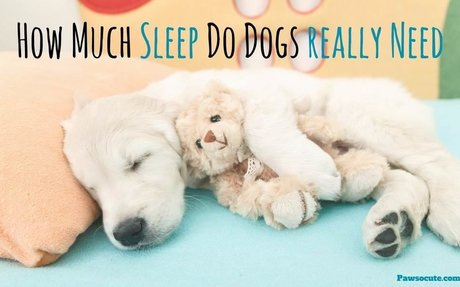 How Much Do Dogs Sleep and How Many Hours Does Fido Really Need Per Day? (The ANSWERS may