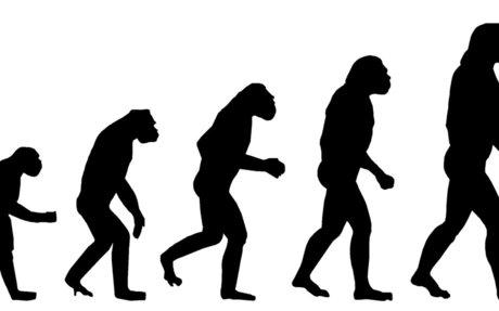 Belief on Evolution