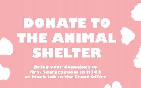 Animal Shelter Donations Flyer
