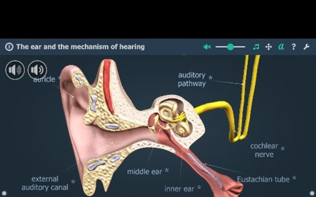The mechanism of hearing educational VR 3D