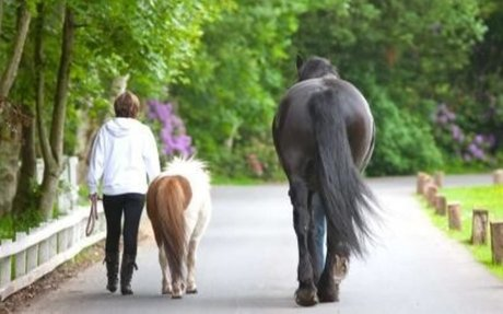 Equine Assisted Psychotherapy | Addiction Treatment | Castle Craig