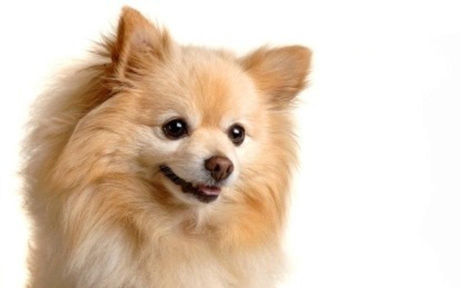 Pomeranian History