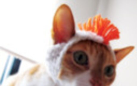 Macskák wc papírral, nyakkendőben vagy hóban / Cats, Beavers & Ducks