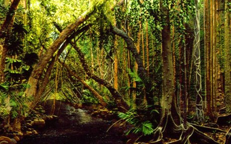 Magic of the Daintree – Jeannie Baker
