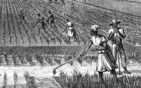 Lowcountry Digital History Initiative | Rice in the Lowcountry · African Passages, Lowcoun