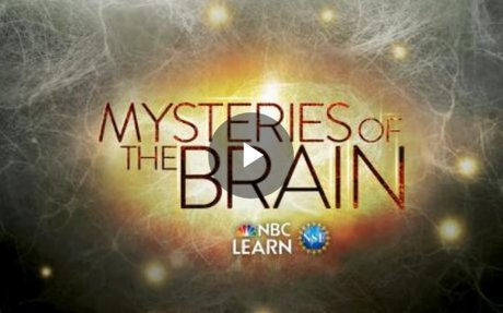 Understanding the Brain - Special Report | NSF - National Science Foundation