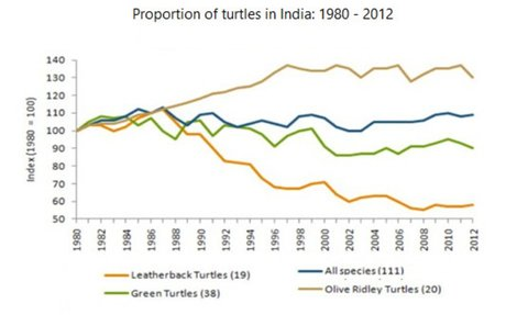 STAT- Leatherbacks in India