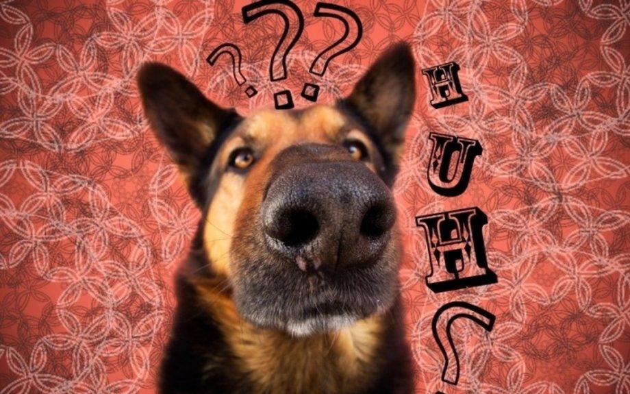 Les 10 questions à se poser avant d'adopter un chien - Soins Pour Tous