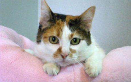 Cat Adoption | Petfinder