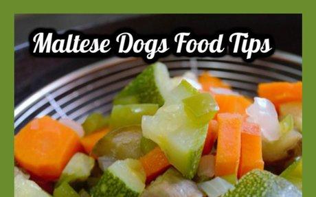 The Best Dog Food for Maltese