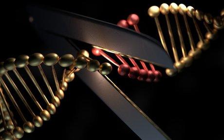CRISPR gene editor could spark immune reaction in people