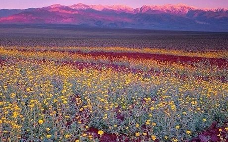 California 'super bloom' visible from space – video report