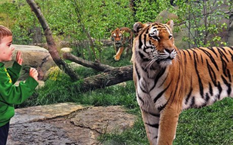 Indianapolis Zoo  Webcams