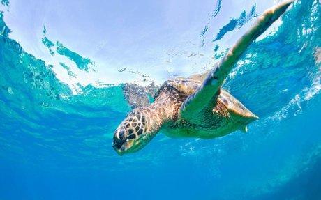 Turtle Beaches In Hawaii