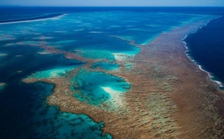 Great Barrier Reef avoids 'in danger' status