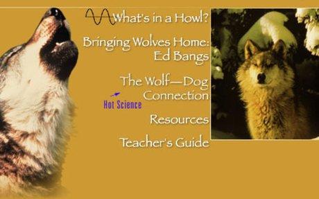 NOVA Online | Wild Wolves