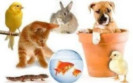 animals1 with pics.ppt