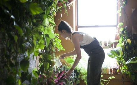 Meet a Woman Who Keeps 500 Plants in Her Brooklyn Apartment - Modern Farmer
