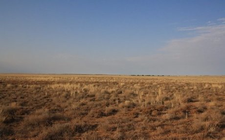 Grasslands    NSW Environment & Heritage