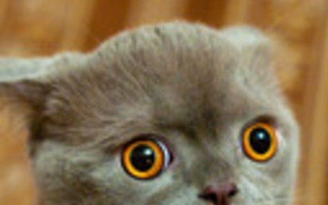 Elborult macskák / Derpycats