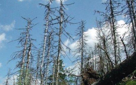 La forêt face au changement climatique : menaces et stratégies d'adaptation