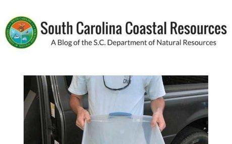 SC Coastal Resources BLOG (SCDNR)