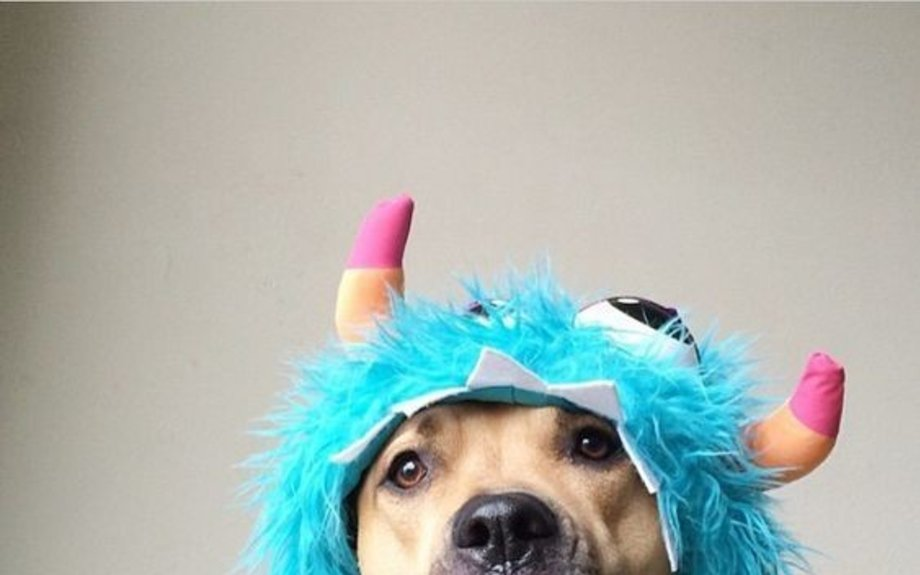Funny Animal Comedy