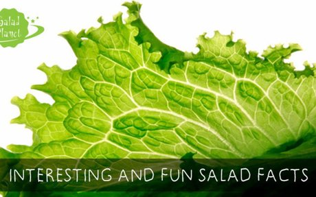 30 Interesting And Fun Facts About Salad - Salad Planet