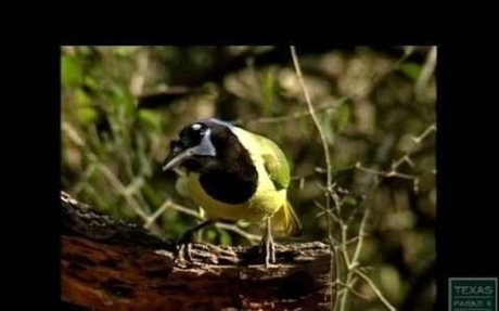 Basics of Birding - Texas Parks and Wildlife [Official]
