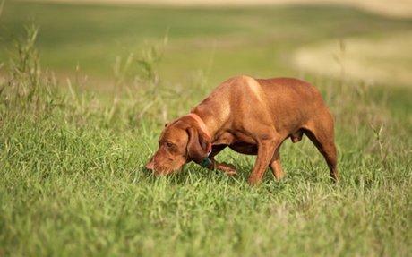 Dog Sports 101: Tracking