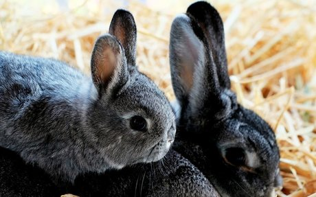 What does the Fibonacci Sequence have to do with rabbits?