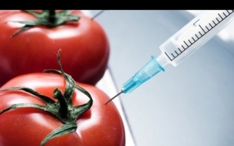GMO's - Pros and Cons
