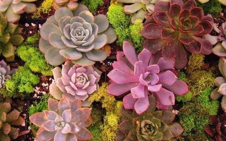 Succulents Are Having a Cultural Moment