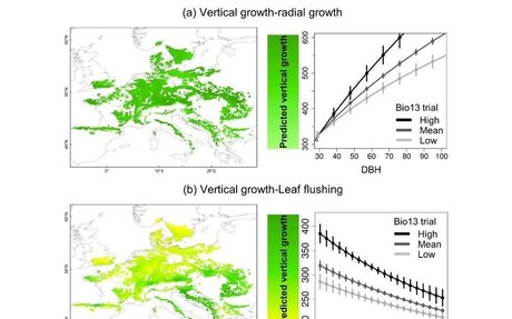 Range-wide variation in local adaptation and phenotypic plasticity in Fagus sylvatica