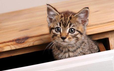 Miért bújnak a macskák szűk helyekre?
