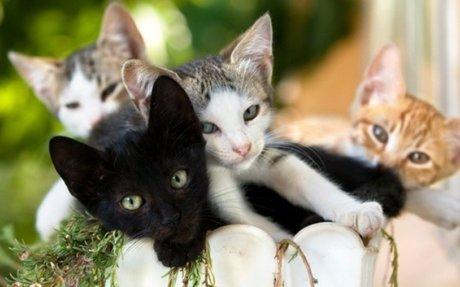 A cica színe árulkodik személyiségéről - Ezt tartják a népi megfigyelések